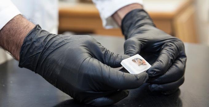 Researcher handling a sample