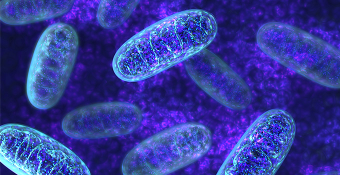 New study uncovers the role of mitochondrial DNA in prostate cancer